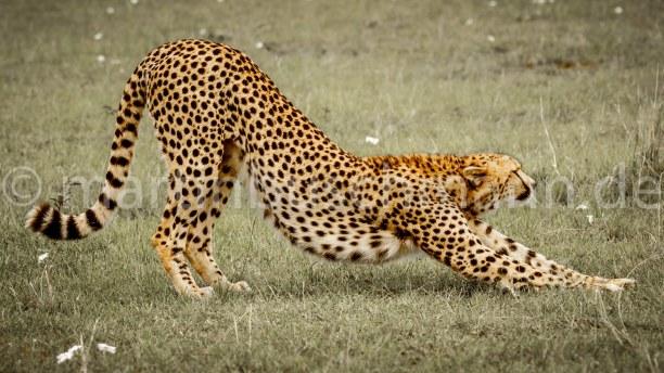 Eine Woche Landesinnere, Kenia, #fotosafari #fotoworkshop #martinbuschmannphotography #myreisefotograf