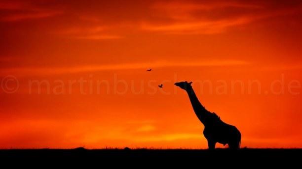 1 Woche Landesinnere, Kenia, #fotosafari #fotoworkshop #martinbuschmannphotography #myreisefotograf