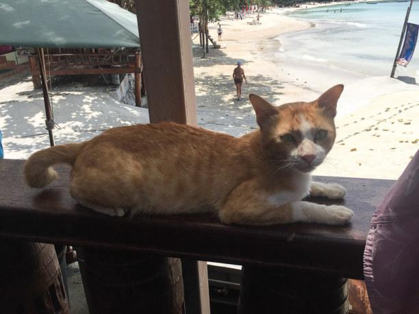 10 Tage Ko Phangan (Stadt), Koh Samui und Umgebung, Thailand, Sekretärin inklusive. ;-)