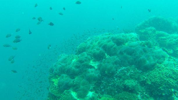 10 Tage Ko Phangan (Stadt), Koh Samui und Umgebung, Thailand, Ich mag die Unterwasserwelt und die Fischschwärme.