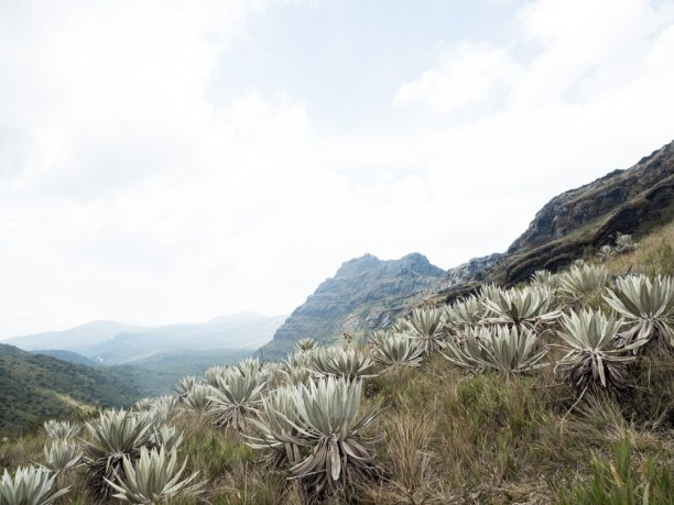 Kurztrip Kolumbien, Kolumbien, Chingaza National Natural Park