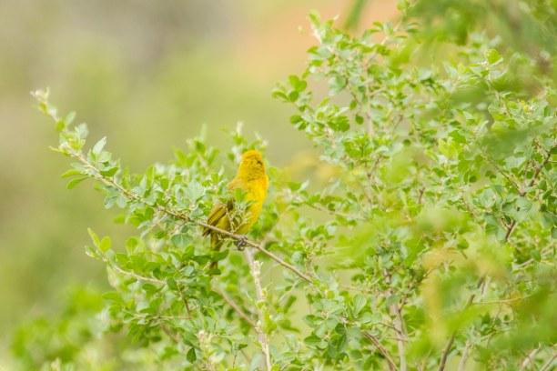 Kurzurlaub Soutpansberg (Stadt), Landesinnere, Südafrika, Die Vogelwelt in Südafrika ist einzigartig und unglaublich vielfälti