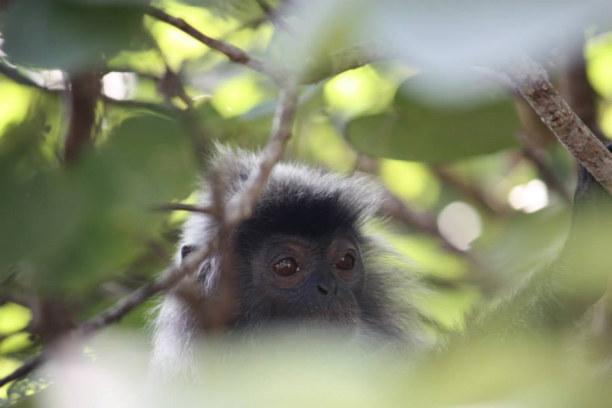 2 Wochen Sabah (Borneo), Malaysia, Borneo