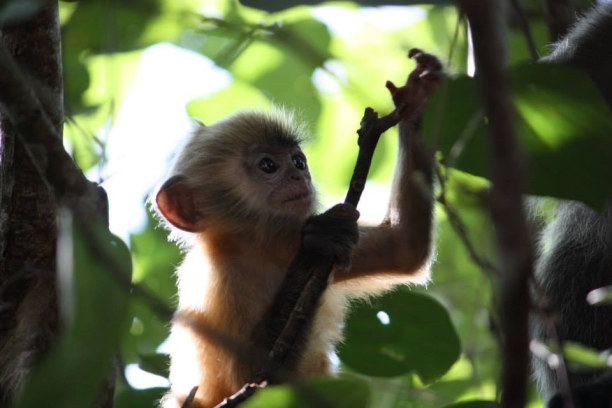 Zwei Wochen Sabah (Borneo), Malaysia, Borneo