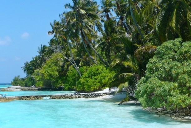 Zwei Wochen Ari Atoll, Malediven, Palmen spenden dir Schatten- in einer Hängematte unter den Palmen kan