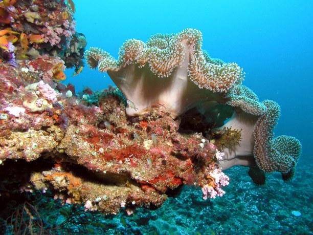 2 Wochen Ari Atoll, Malediven, Die Unterwasserwelt auf den Malediven ist fantastisch. Schnorcheln sol