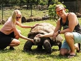 2 Wochen Mauritius, Mauritius, Riesenschildkröten