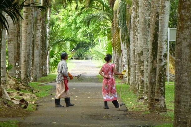 10 Tage Südküste, Mauritius, Der botanische Garten in Pamplemousses