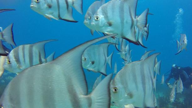 """Zwei Wochen Riviera Maya & Insel Cozumel, Mexiko, """"Fischsuppe"""" gefällig? ;-)"""