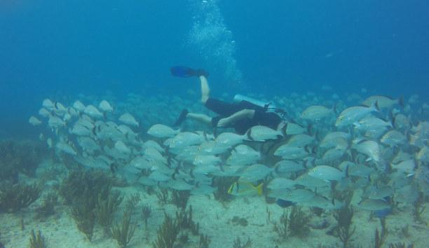 2 Wochen Riviera Maya & Insel Cozumel, Mexiko, Mit Fischschwärmen zu tauchen ist für mich jedes Mal ein aufregendes