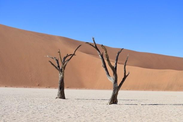 Kurztrip Namibia, Namibia, Manche der abgestorbenen Akazienbäume sind über 500 Jahre alt.