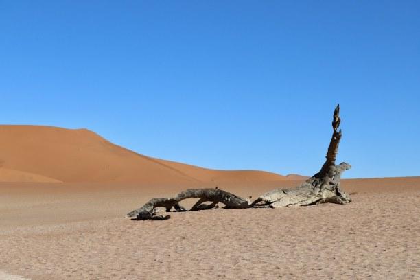 Kurztrip Namibia, Namibia, Die Baum- und Astskelette sind das Wahrzeichen von Deadvlei. Schon am