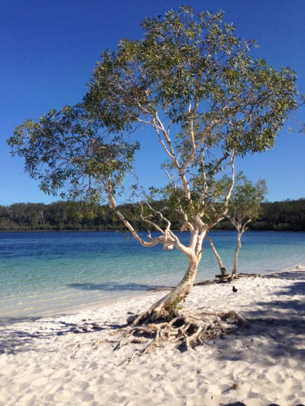 Langzeiturlaub Südinsel, Neuseeland, Fraser Island