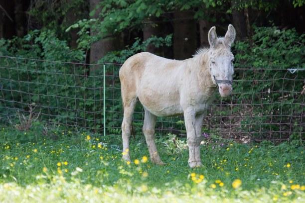 Kurzurlaub Natters (Stadt), Nordtirol, Österreich, Beim Wirtshaus Natterer Boden gibt es viele verschiedene Tiere zu sehe