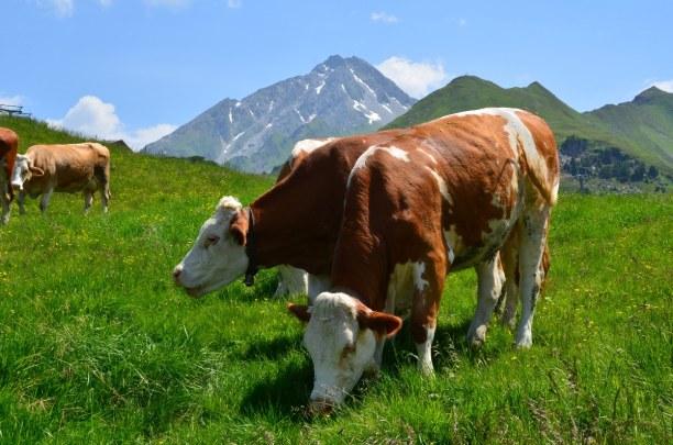 10 Tage Tirol, Österreich, Zillertal