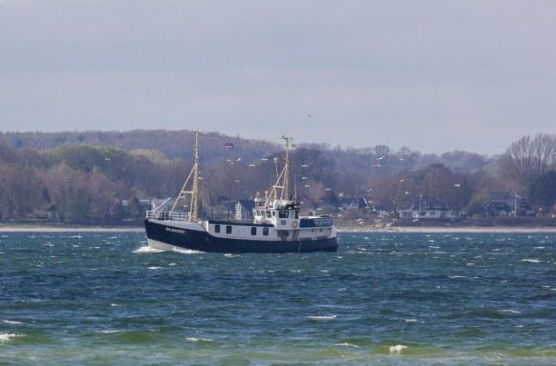 Kurztrip Laboe (Stadt), Ostseeküste, Deutschland, Die Fischkutter bringen ihren Fang in den Hafen.