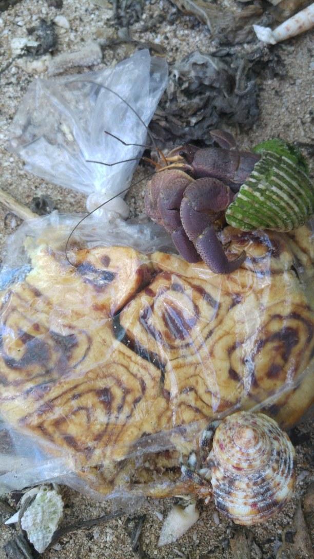 Kurzurlaub Palauinseln, Palauinseln, Hungrige Einsiedlerkrebse :)