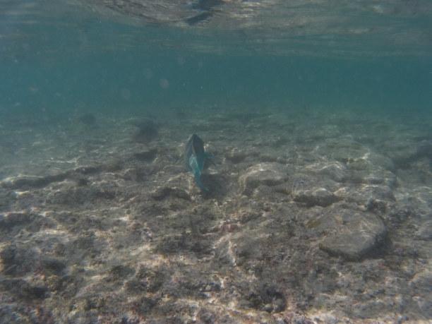 Eine Woche Phuket und Umgebung » Similan-Inseln