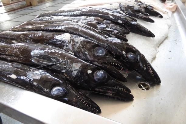 1 Woche Madeira, Portugal, Am Markt gibt es Degenfisch zu kaufen