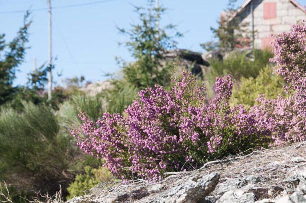 10 Tage Mittelportugal, Portugal, Das Klima ist hier in den Bergen rau, die Vegetation hat sich an diese