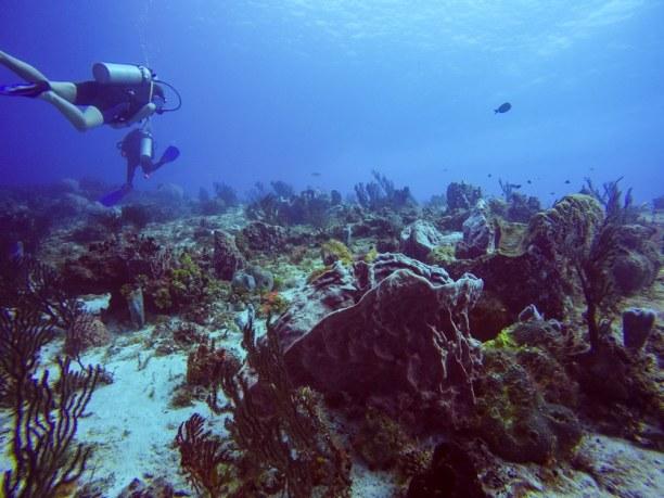 Langzeiturlaub Cozumel (Stadt), Riviera Maya & Insel Cozumel, Mexiko, Die Riffe Cozumels zählen zu den schönsten der Welt!