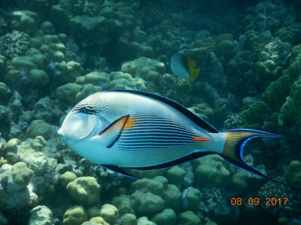 2 Wochen Makadi Bay (Stadt), Rotes Meer, Ägypten, Die schönste Tussy