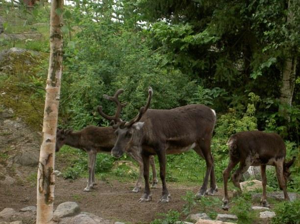 Kurzurlaub Stockholm & Umgebung, Schweden, Skansen ist ein Freilichtmuseum mit Tierpark in welchem vor allem nord