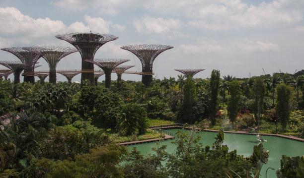 Kurztrip Singapur (Stadt), Singapur, Singapur, Die Super Trees zählen auch zu den Wahrzeichen von Singapur. Du finde
