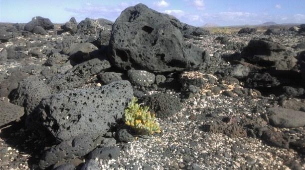 Eine Woche Fuerteventura, Spanien, Fuerteventura ist eine vulkanische Insel, allerdings ist die Vulkanakt