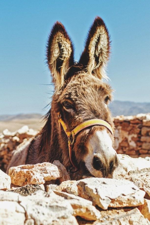 1 Woche Fuerteventura, Spanien, Tiscamanita ist ein kleines Bauerndorf. Früher wurde hier viel Landwi