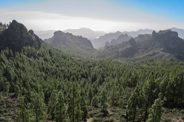 1 Woche Gran Canaria, Spanien, Ein Tagesausflug in die Pinienwälder von Tamadaba im Nordwesten der I