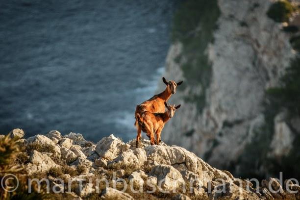 1 Woche Mallorca, Spanien, Cap Formentor