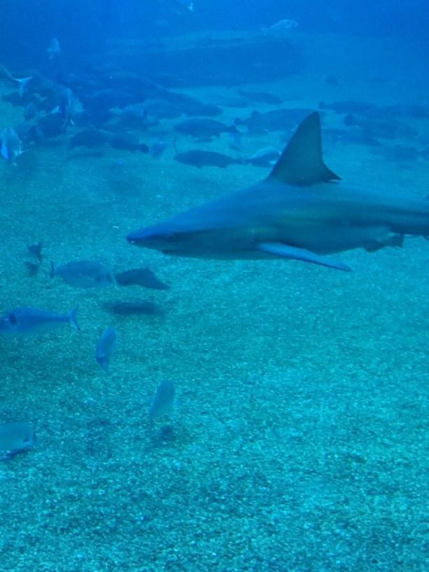 1 Woche Mallorca, Spanien, Hai im Fischmuseum