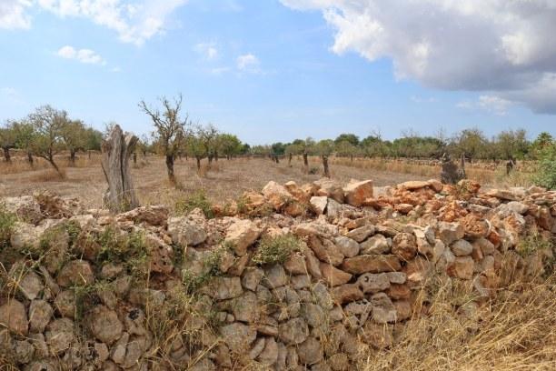 1 Woche Mallorca, Spanien, Diese Trockenmauern finden sich vor allem im flachen Süden und Osten