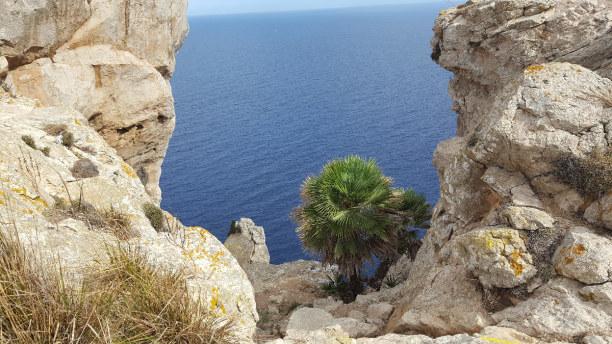 Eine Woche Spanien » Mallorca