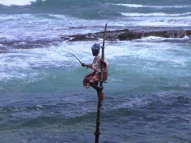 2 Wochen Sri Lanka, Sri Lanka, Die Stelzenfischer  kannst du meistens morgens und am späten Nachmitt