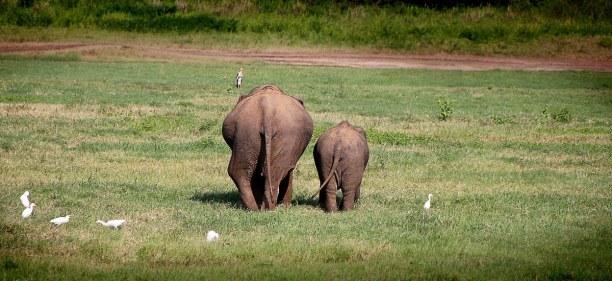Zwei Wochen Sri Lanka, Sri Lanka, Pinnawala