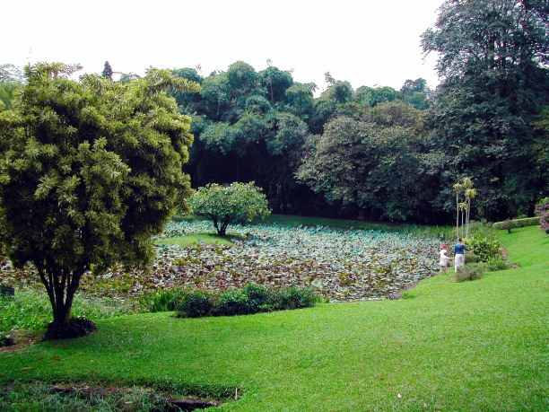 Zwei Wochen Sri Lanka, Sri Lanka, Der 80 Hektar große Botanische Garten beherbergt 4000 Pflanzenarten,