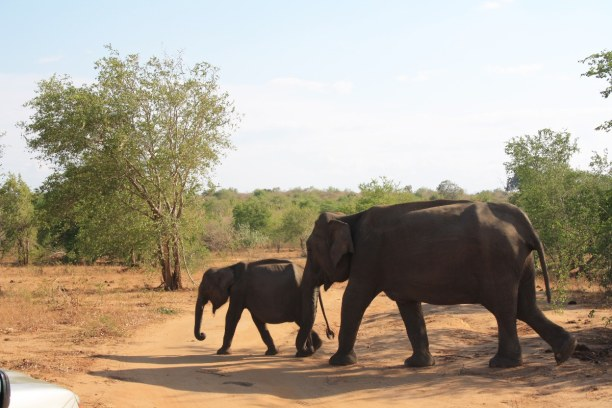 Zwei Wochen Sri Lanka » Sri Lanka