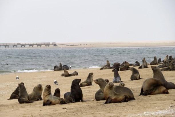 Drei Wochen Kapstadt & Umgebung, Südafrika, Am Pelican Point kann man wunderbar Flamingos, Robbenkolonien und wenn