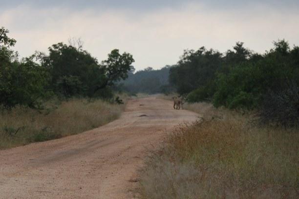 Kurztrip Nationalpark, Südafrika, Am nächsten Morgen fahren wir zum benachbarten Manyeleti Game Reserve