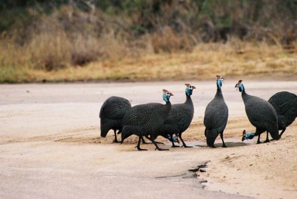 2 Wochen Südküste, Südafrika, Der Kruger Nationalpark liegt im Nordosten Südafrikas und hat eine Fl