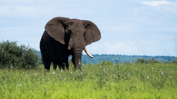 2 Wochen Südküste, Südafrika, Du hast Lust auf eine Safari? Das kannst du im Kruger Nationalpark mac