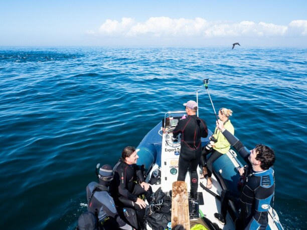 Langzeiturlaub Port Elizabeth (Stadt), Südküste, Südafrika, Der Sardine Run - also die Migration von Sardinen - ist der eigentlich