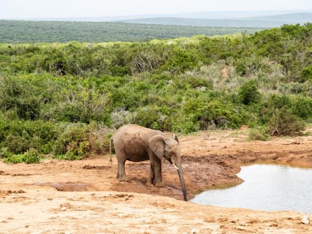 Langzeiturlaub Port Elizabeth (Stadt), Südküste, Südafrika, Der Addo Elephant National Park eignet sich für einen Tagesausflug vo