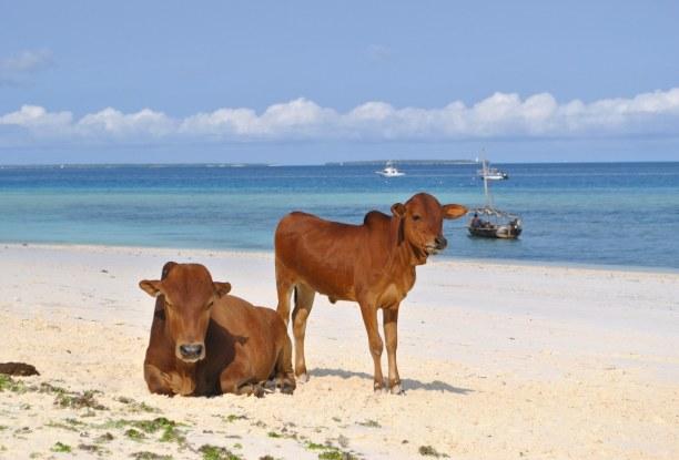 Zwei Wochen Sansibar (Zanzibar), Tansania, Dank der Nähe zum Äquator ist es auf Sansibar das ganze Jahr hindurc