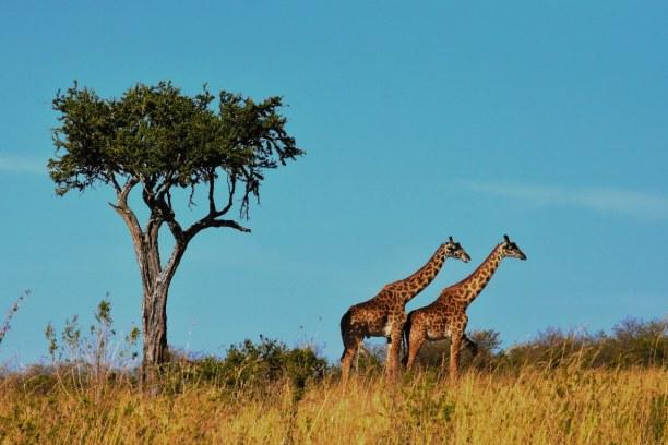Zwei Wochen Tansania, Tansania, Der Serengeti Nationalpark bedeckt eine 30.000 km² große Fläche.  I
