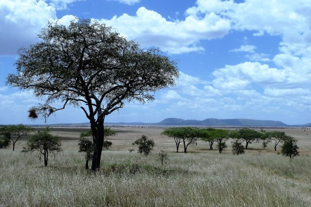 2 Wochen Tansania, Tansania, Serengeti National Park