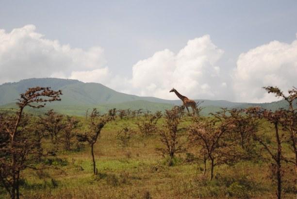 2 Wochen Tansania, Tansania, Im Gombe- Stream- Nationalpark hat die Forscherin Jane Goodall 1960 fa