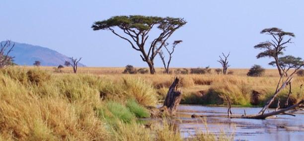 Zwei Wochen Tansania, Tansania, Serengeti National Park